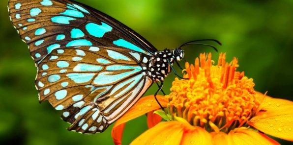 -65% на выставку тропических бабочек «Тропикариум»