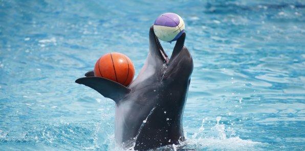 -50% на шоу дельфинов KUPCHINO